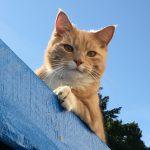 Harry the cat
